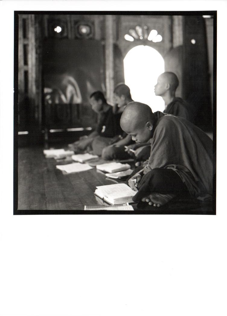 Burmese study
